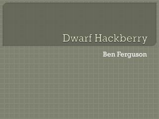 Dwarf Hackberry
