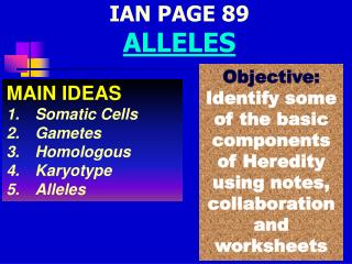 IAN PAGE 89 ALLELES