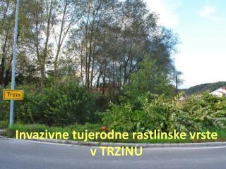 Invazivne tujerodne rastlinske vrste   v TRZINU