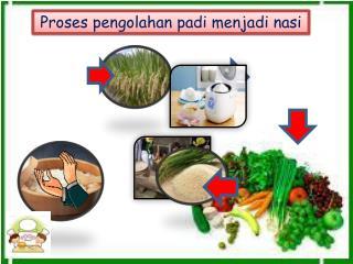 Proses pengolahan padi menjadi nasi