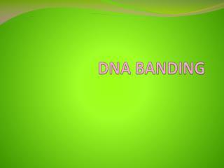 DNA BANDING
