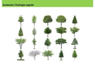Anatomia  i  fisiologia  vegetal