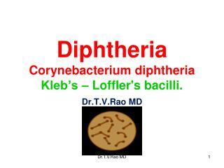 Diphtheria Corynebacterium diphtheria Kleb�s � Loffler's bacilli.
