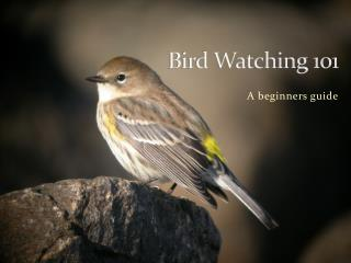 Bird Watching 101