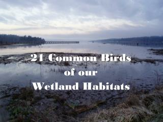 21 Common Birds  of our Wetland Habitats