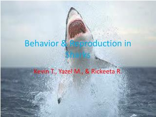 Behavior & Reproduction in Sharks