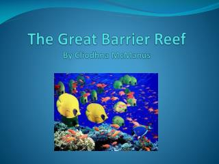 The Great Barrier Reef By Cliodhna McManus