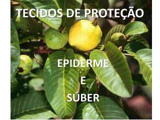 TECIDOS DE PROTEÇÃO