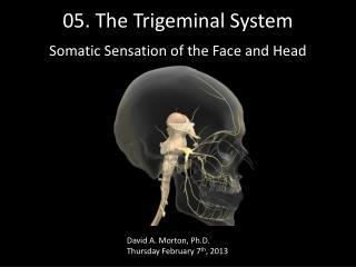 05.  The Trigeminal System