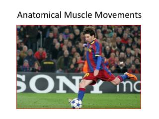 Anatomical Muscle Movements