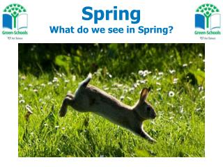 Spring What do we see in Spring?