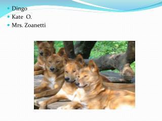Dingo  Kate   O. Mrs.  Zoanetti