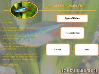 WELCOME! This is a module to teach you all about the different types of  fish.
