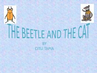 THE BEETLE AND THE CAT