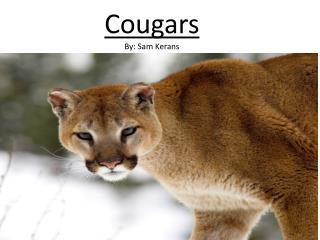 Cougars By: Sam Kerans