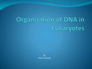 Organization of DNA in Eukaryotes
