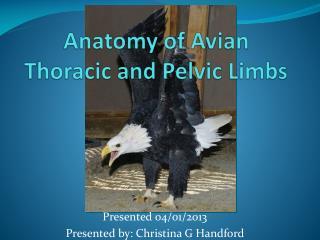 Anatomy of Avian Thoracic and Pelvic Limbs