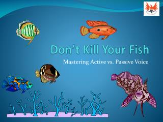 Don't Kill Your Fish