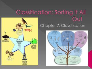 Classification: Sorting It All Out