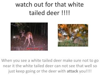 watch out for that white tailed  deer !!!!