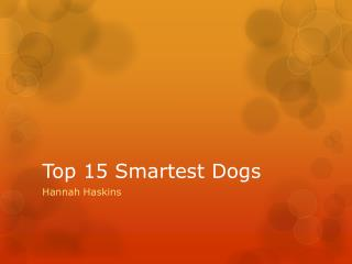 Top 15 Smartest Dogs