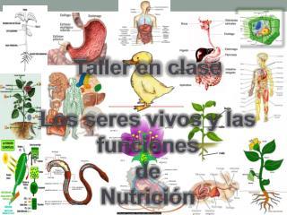 Taller en clase  Los seres vivos y las funciones d e  Nutrición