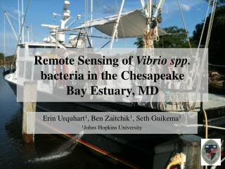 Remote Sensing of  Vibrio spp.  bacteria in the Chesapeake  Bay Estuary, MD