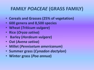 FAMILY  POACEAE  (GRASS FAMILY)