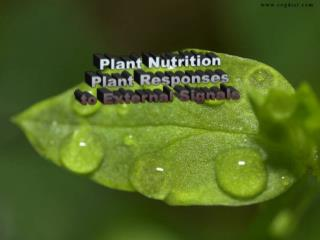 Plant Nutrition Plant Responses to External Signals