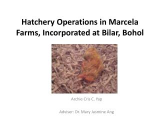 Hatchery Operations in Marcela Farms, Incorporated at  Bilar , Bohol