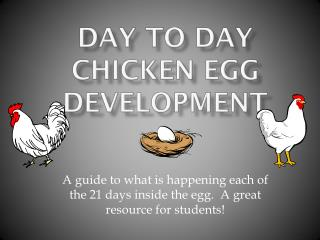 Day to Day Chicken Egg Development