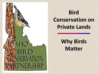 Bird Conservation on Private Lands  Why Birds Matter