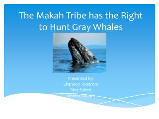 The Makah Tribe has the Right to Hunt Gray Whales