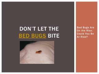 Don't Let the Bed Bugs Bite - Bed Bugs Are On the Rise. Coul