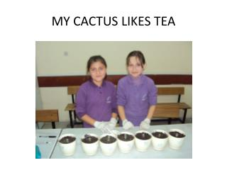 MY CACTUS LIKES TEA