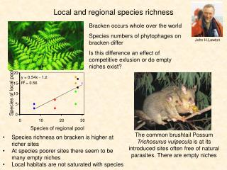 Local and regional species richness