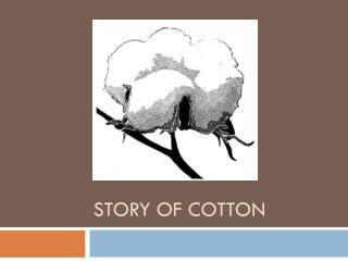 Story of cotton