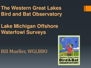 The Western Great Lakes  Bird and Bat Observatory  Lake Michigan Offshore  Waterfowl Surveys