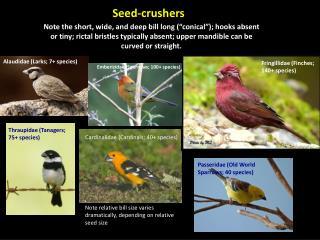 Seed-crushers