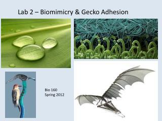 Lab 2 – Biomimicry & Gecko Adhesion