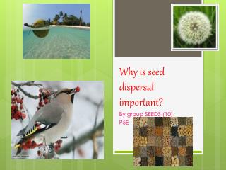 Why is seed dispersal important?
