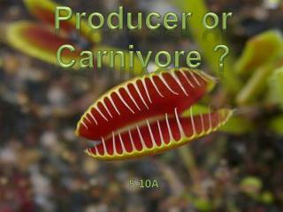 Producer or Carnivore ?