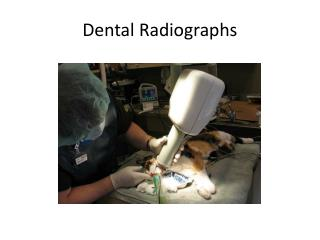 Dental Radiographs