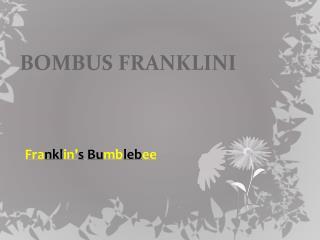 BOMBUS FRANKLINI