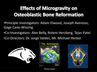 Effects of Microgravity on  Osteoblastic  Bone Reformation