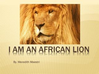 I am an African Lion