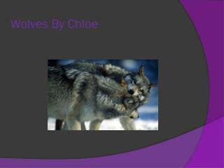 Wolfs By  Chloie Wolves By Chloe