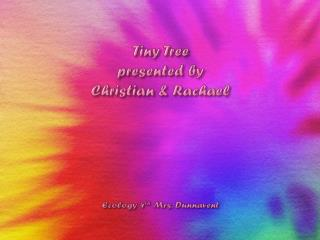 Tiny Tree  presented by  Christian & Rachael  Ecology 4 th  Mrs.  Dunnavent