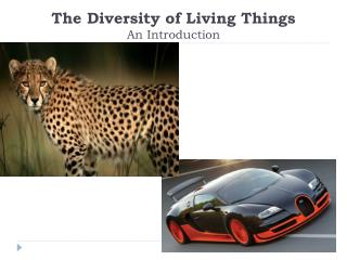 The Diversity of Living Things An Introduction