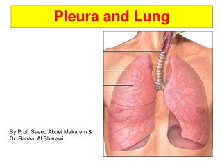 Pleura and Lung